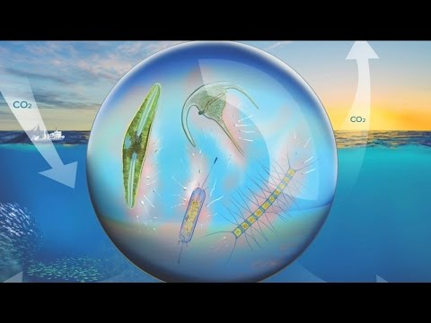 Unlocking the role of marine microbes in the global carbon cycle