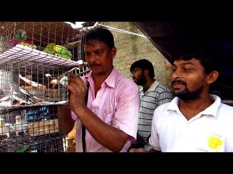 PRICE UPDATE OF BIRD AT GALIFF STREET PET MARKET KOLKATA INDIA | 16TH JUNE 2019 VISIT