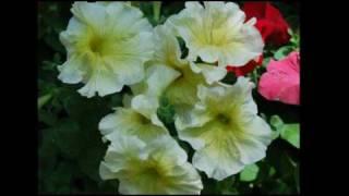 flowers.mp4