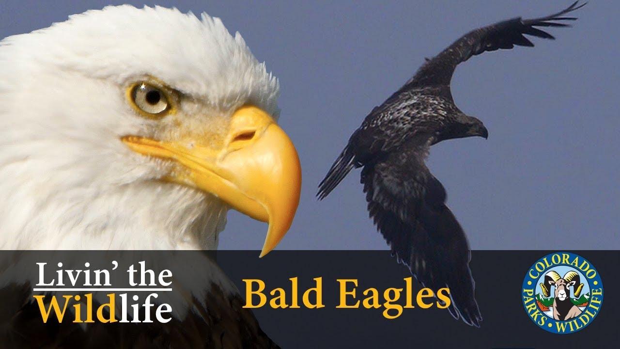 Colorado parks wildlife species profiles