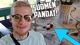 Maksoin 68€ nähdäkseni Suomen pandat.