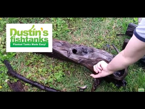 How to use Driftwood in your Aquarium: Driftwood tips and tricks