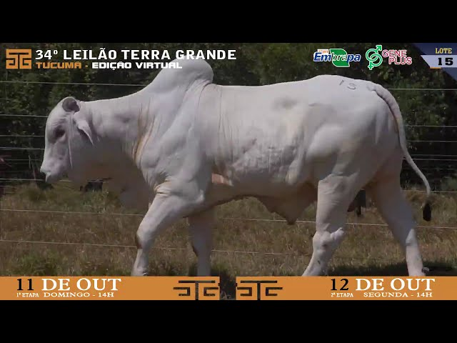 LOTE 015