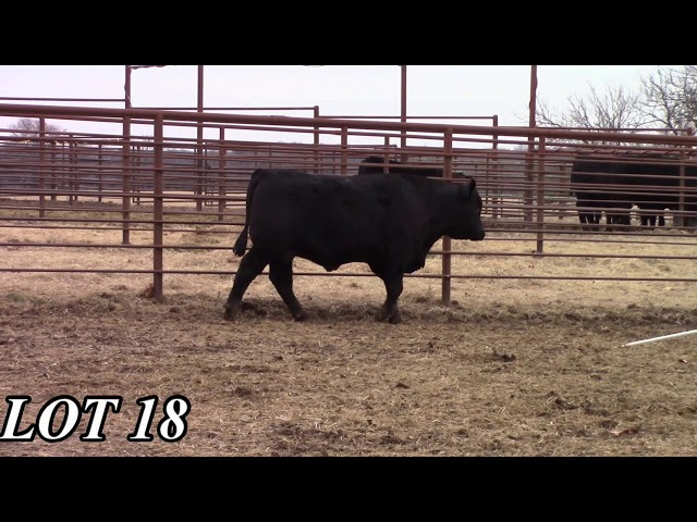 Mead Angus Farms Lot 18