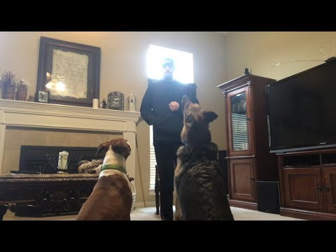 Dogs in the House | Odin & Samson