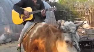 Chinese Farmer Riding Cow Sings Justin Bieber's  Baby