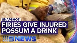 NSW Bushfires: Firefighters help hot, thirsty possum | Nine News Australia