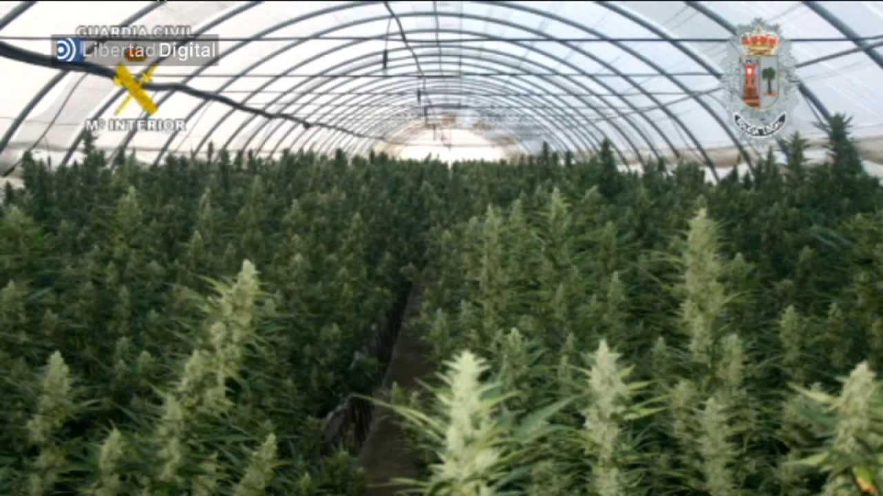 La mayor plantaci n de marihuana de espa a youtube - Plantaciones de marihuana interior ...