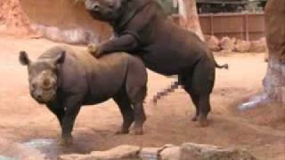 ANIMAL SEX !!  so funny :)) - Hayvan sex
