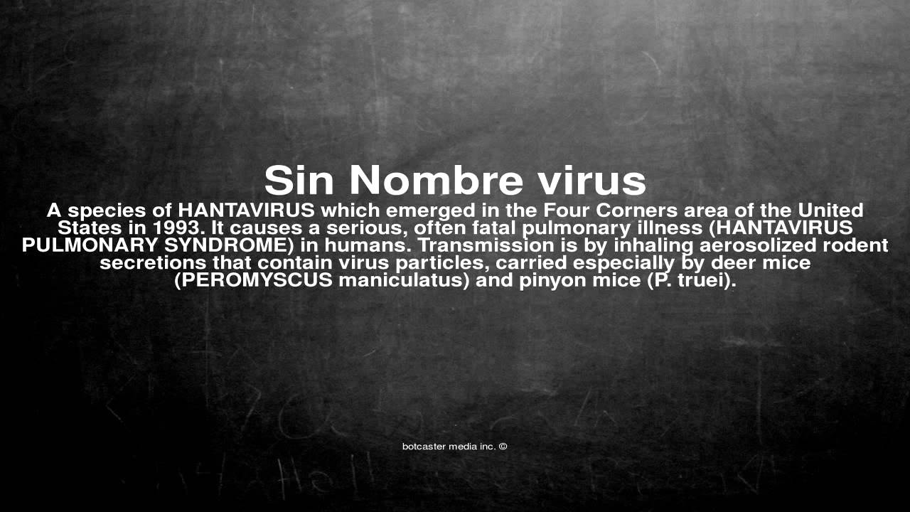 Arte De Vivir Meaning In English Medical Vocabulary What Does Sin Nombre Virus Mean