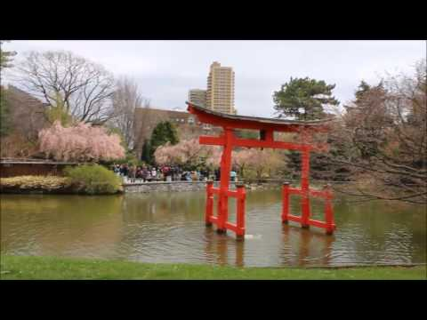 Brooklyn Botanic Garden 2017 Cherry Blossom and Japanese Garden