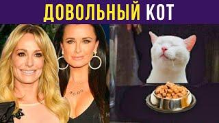 Приколы с котами. ДОВОЛЬНЫЙ недовольный кот | Мемозг #284