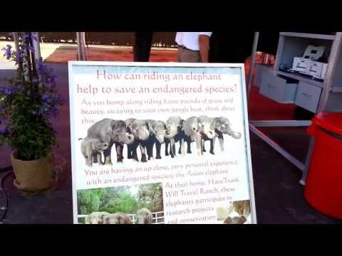 Have Trunk Will Travel Elephant Abuse Rides - San Diego, CA - Del Mar Racetrack July 4