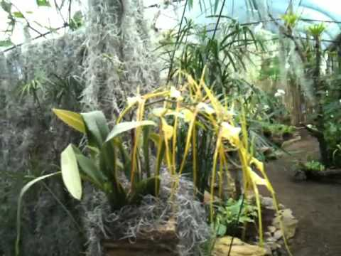 Jardin de cuitlauzin orquideas rio verde youtube for Jardines verdes