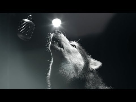 Dogs Sing For A Cure – We Could Be Heroes