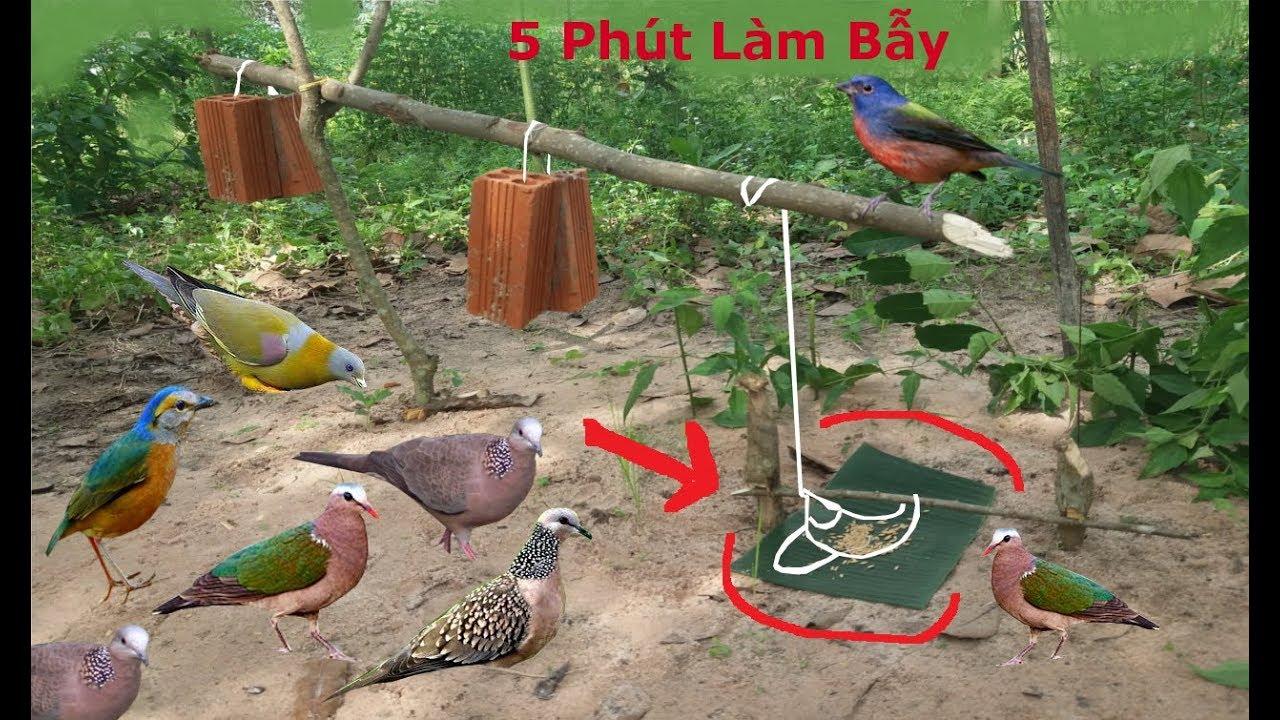 5 Phút Làm Bẫy Chim Cu Gáy .Cu Cườm .Chim Sáo .Chim Két Rất Đơn Giản Hiệu Quả Cao .Best Bird Trap