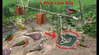 5 Phút Làm Bẫy Chim Cu Gáy .Cu Cườm .Chim Sáo .Chim Két Rất Đơn Giản Hiệu Quả Cao .Best Bird Trap thumbnail