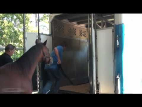 Horse Pre-export Quarantine and Transportation /paardentransport