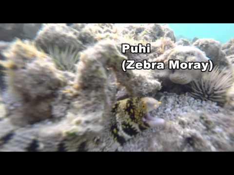 Know Your Hawaiian Reef Fish