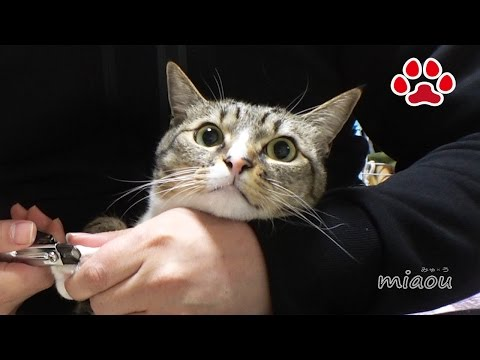 Cat Care,Mimi【Cat's room,Miaou】