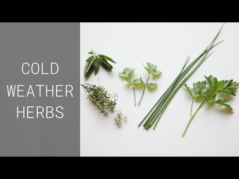 Hardy Herbs To Grow Outdoors