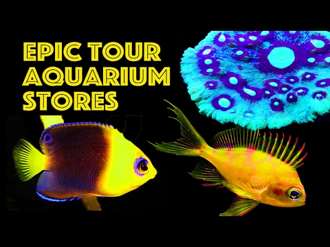Highlight Reel of Ultimate Aquarium Store Tour