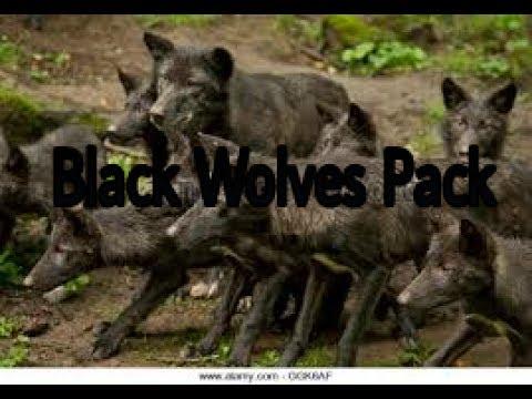 √•Wolf Online. Black Mountain Wolf Pack Gameplay•√