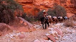 Mail being brought in to Supai