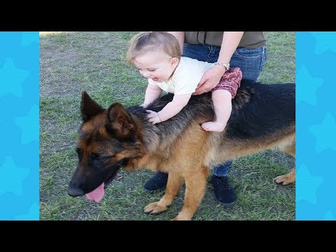 German Shepherd Dog friendly Playing with Baby | Dog loves Baby Videos
