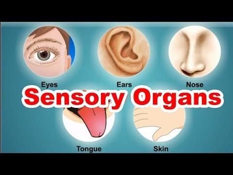 Sensory Organs | 3rd Std | EVS | English Medium | Maharashtra State Board | Home Revise