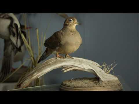 Small Business Profiles: Robert Olson of Frozen in Flight Bird Taxidermy