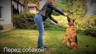 Дрессировка собаки: Команда Зайка | КАК НАУЧИТЬ СОБАКУ КОМАНДЕ ЗАЙКА