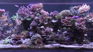 Peter's Fish Tank - Episode 3.1 - Eye Candy