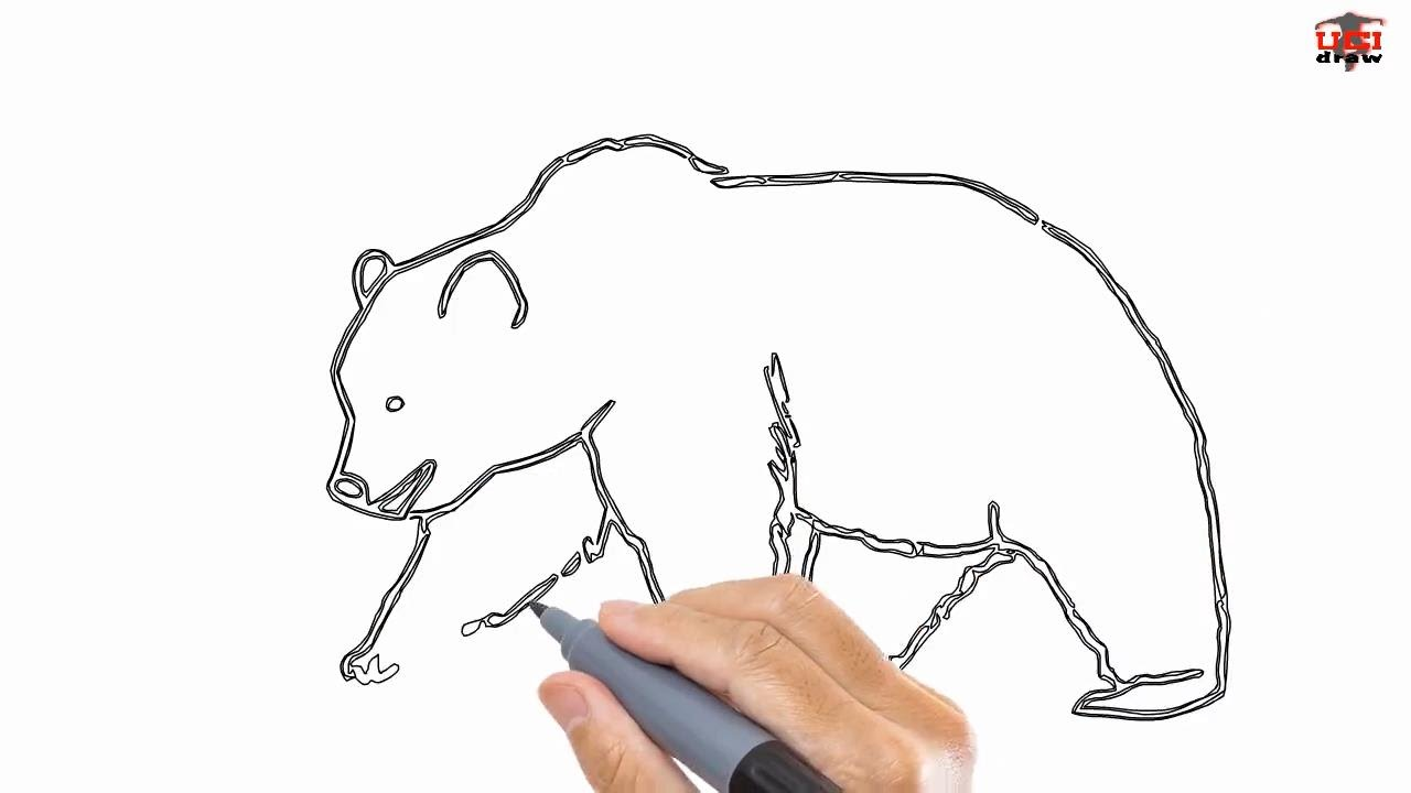 how to draw a bear step by step drawing by ucidraw youtube