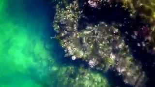 堂ヶ島でシュノーケリングしてきました 久しぶりに綺麗な海でした.