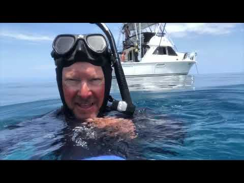 Cairns Marlin Season 2018