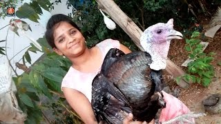 Village Girl Cooking Of Turkey Curry  || Village Traditional Recipes  || By Sri Tv