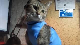 Десять дней кошки Муськи после операции