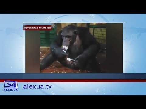 Телеканал ALEX UA - Новости: Сводка
