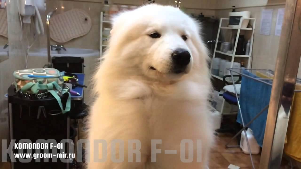 Двухтурбинный фен-компрессор для сушки шерсти собак - YouTube