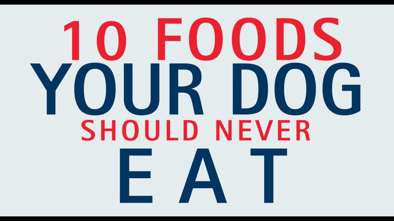 10 Foods Your Dog Should Never Eat Youtube