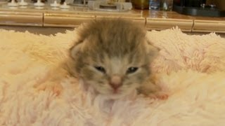 Adorable Kittens Can't Get Out Of Bed