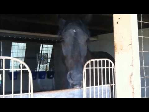 """Knight Shade """"THE TALKING HORSE"""" - You Were Born Long Ago! (Birthday Song)"""