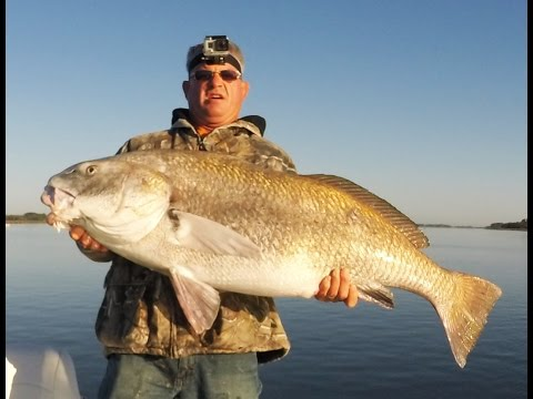 Fishing For Giant Black Drum In St  Augustine