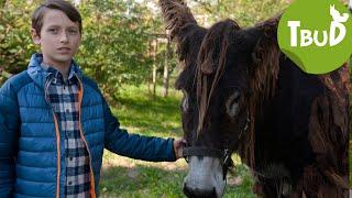 Tiere bis unters Dach - Geh' du alter Esel (Folge 68) | Tiere bis unters Dach | SWR Kindernetz