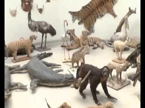 Lahore Zoo Embalm Animal Museum Pkg By Tazeen Malik City42