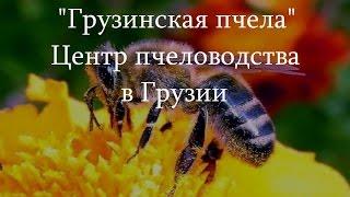 ''Грузинская пчела'' - Центр пчеловодства в Грузии
