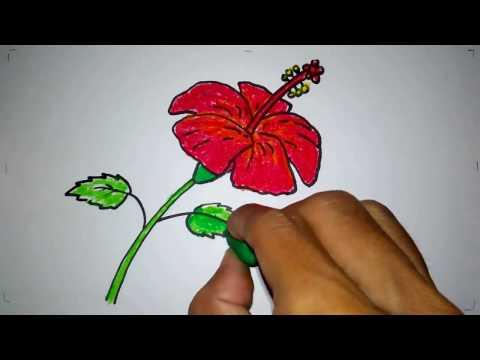 Cara Menggambar Bunga Sepatu Youtube
