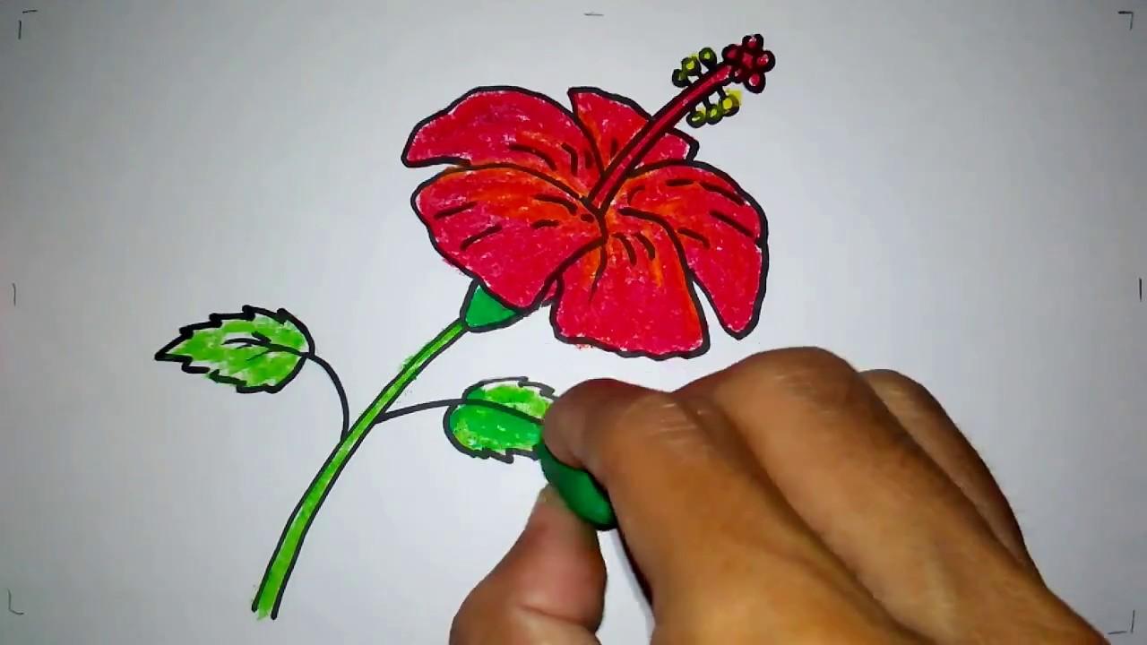 cara menggambar bunga sepatu