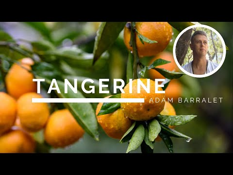 Tangerine - The Oil of Joyous Discovery